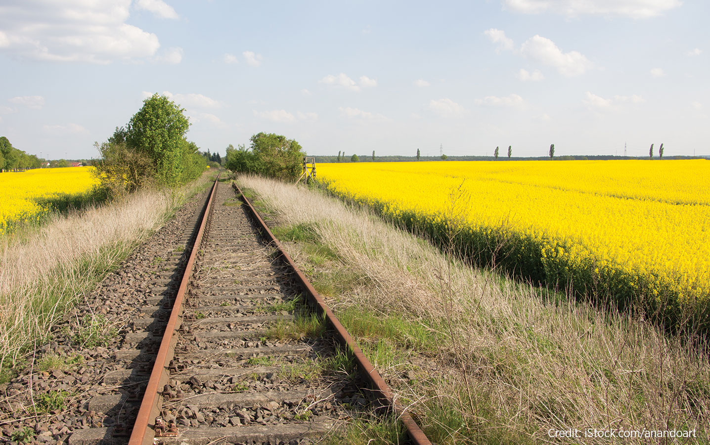 Rail line running through a canola field
