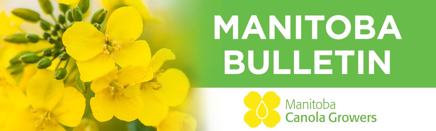 Manitoba Bulletin
