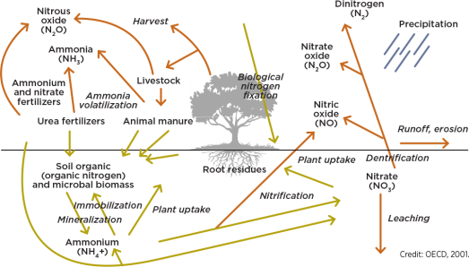 Simplified nitrogen cycle. This includes the four ways nitrogen can be lost.