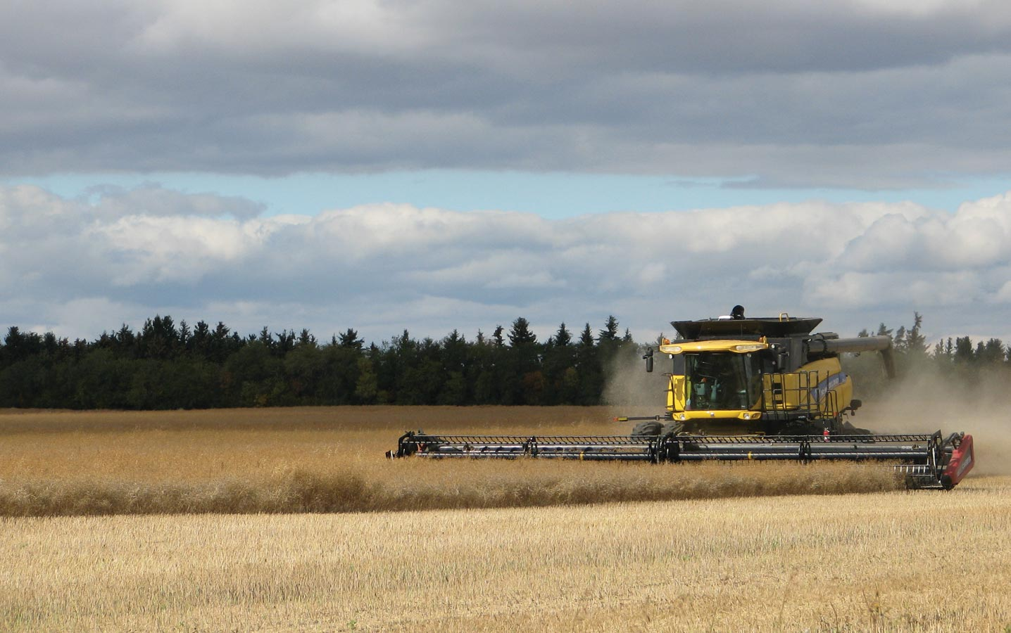 What we know about straight combining canola