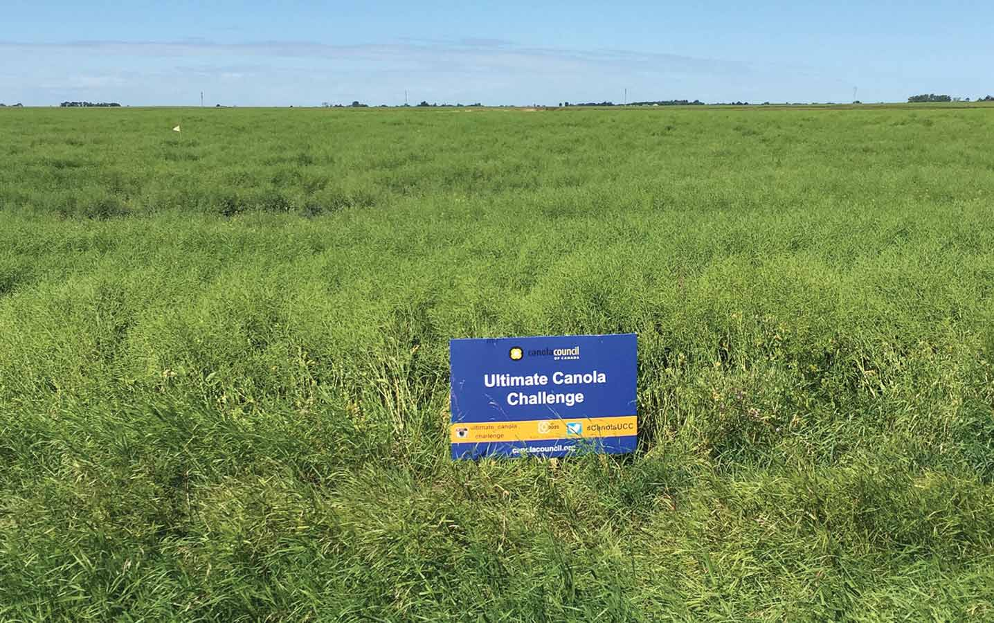 A large green field with a sign: Ultimate Canola Challenge