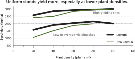 Uniform stands yield more, especially at lower plant densities.