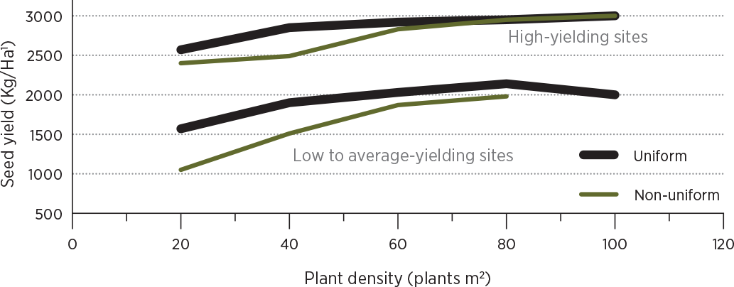 Uniform stands yield more, especially at lower plant densities