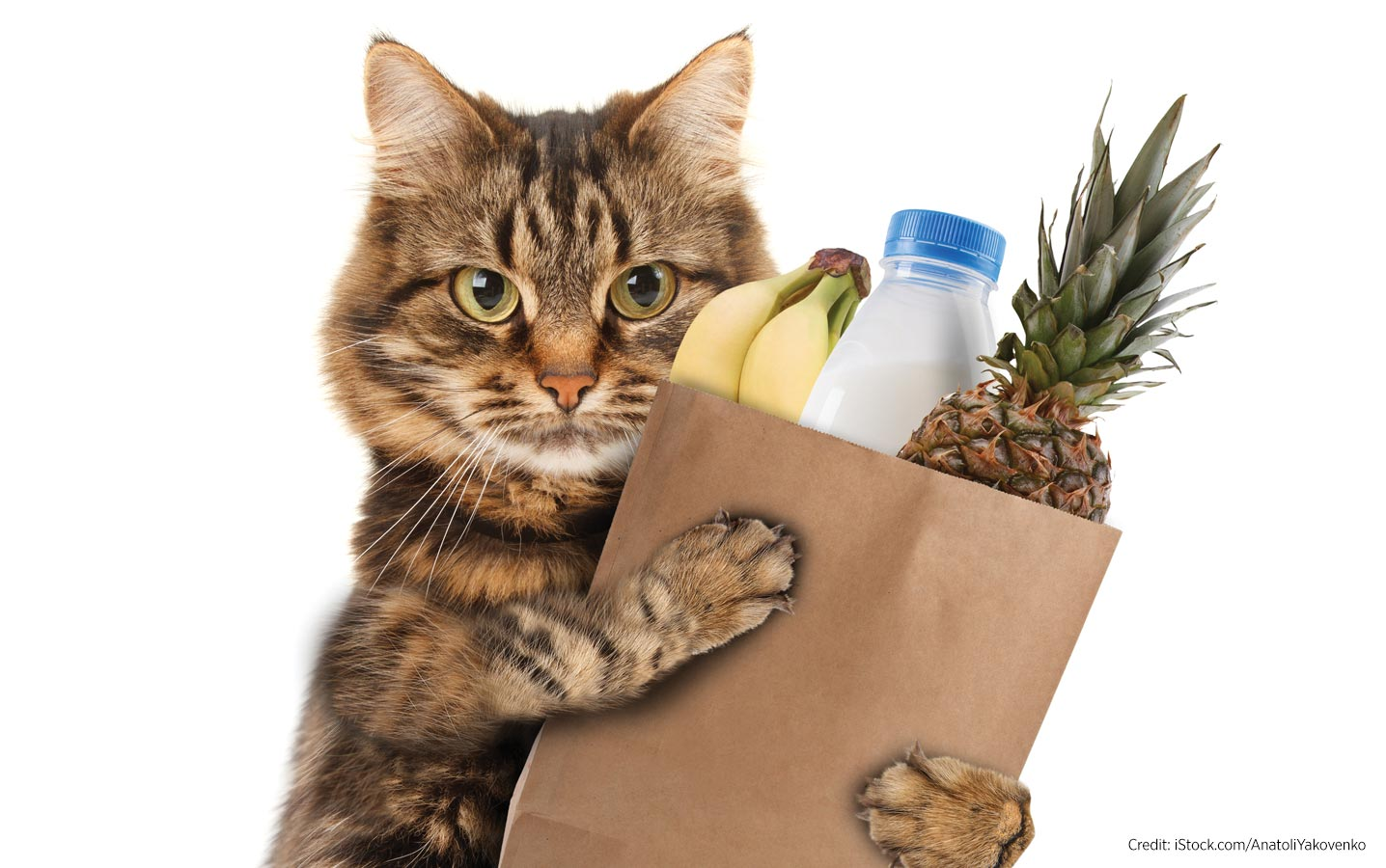 Photo of a cat holding a bag of groceries