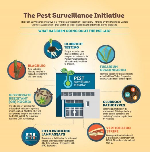 "Infographic: The Pest Surveillance Initiative is a ""molecular detection"" laboratory (funded by the Manitoba Canola Growers Association) that works to track clubroot and other soil-borne diseases"