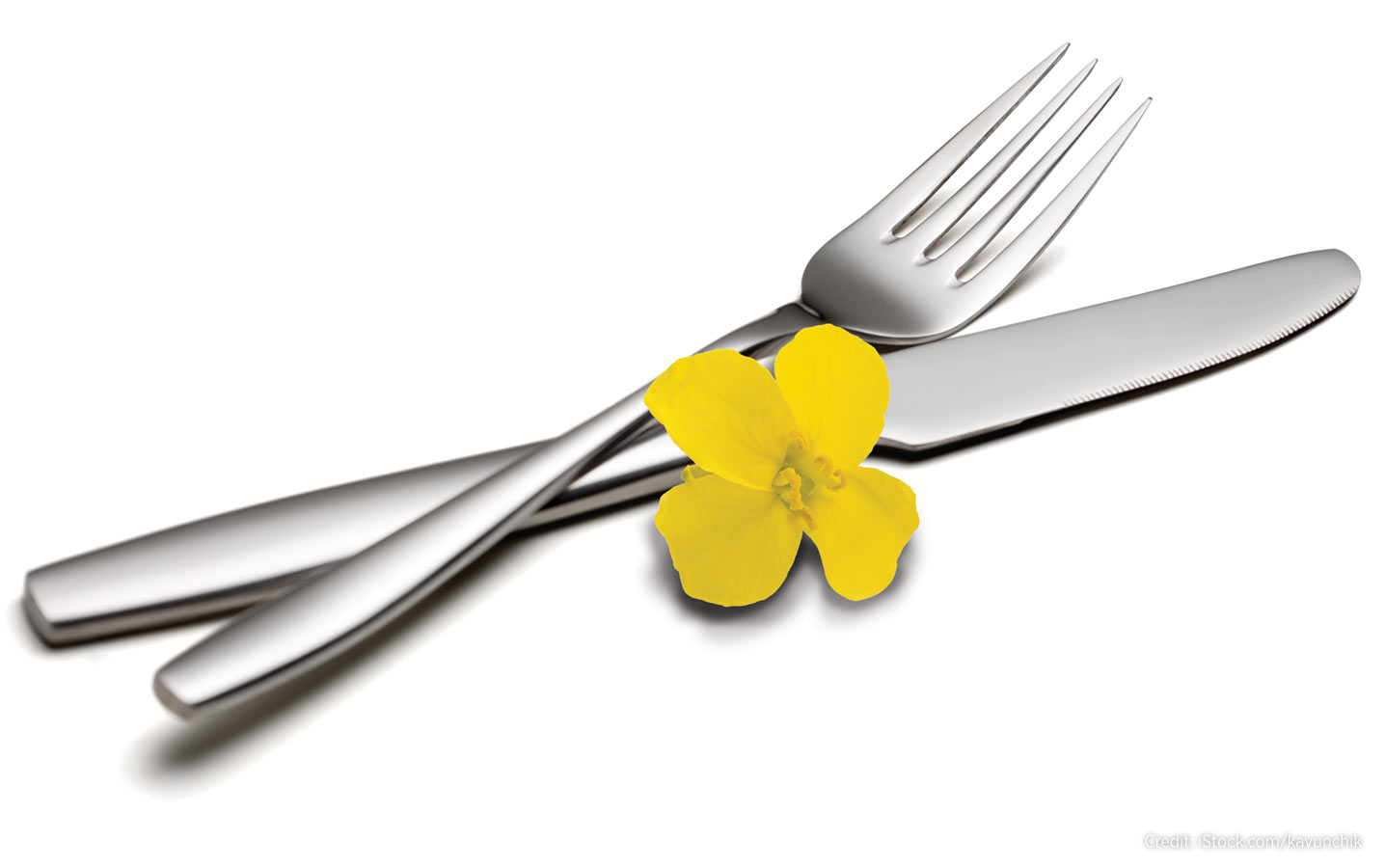 knife and fork with canola blossom