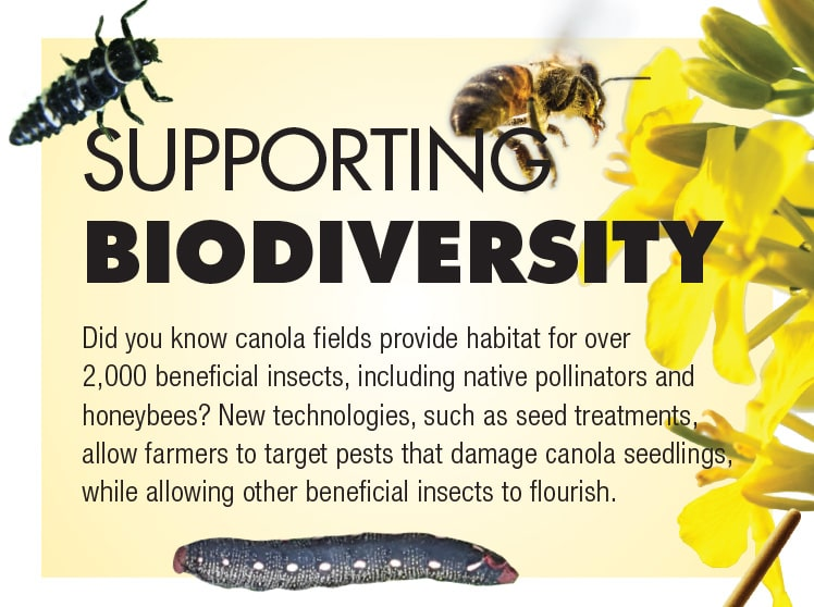 Supporting Biodiversity: New technologies, such as seed treatments, allow farmers to target pests that damage canola seedlings, while allowing other beneficial insects to flourish.