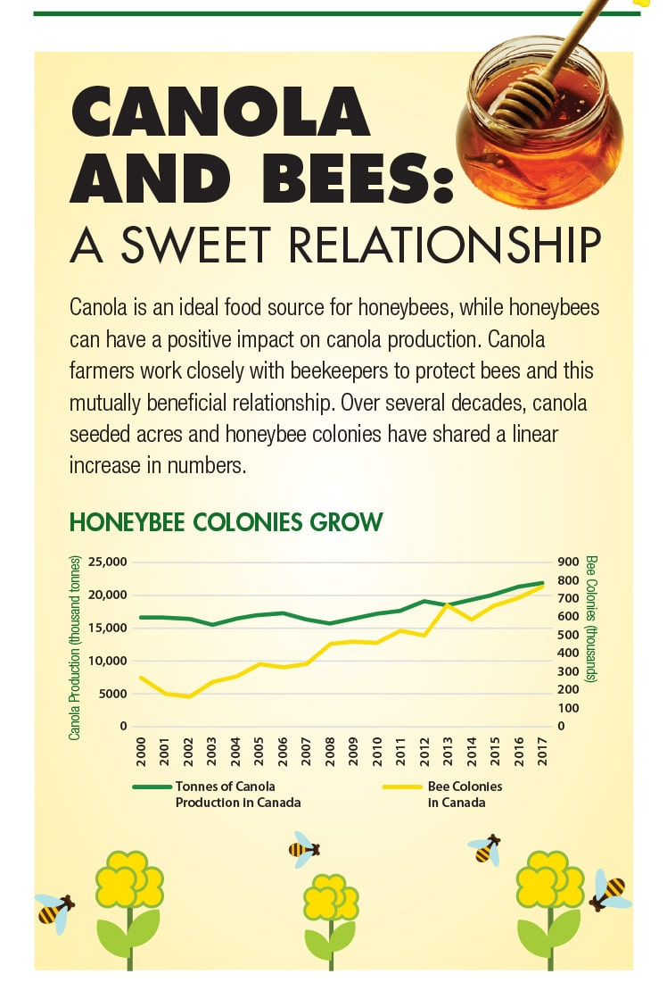 Canola and Bees: A Sweet Relationship. Canola is an ideal food source for honeybees, while honeybees can have a positive impact on canola production.