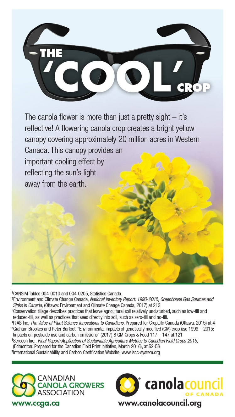 The 'Cool' Crop: The canola flower is more than just a pretty sight – it's reflective!