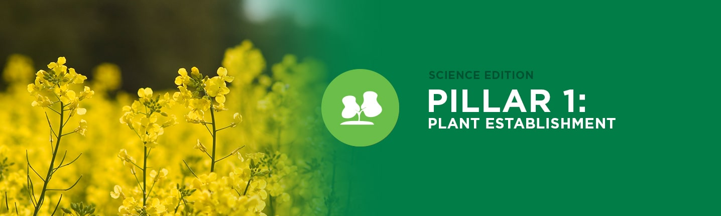 Pillar 1: Plant Establishment