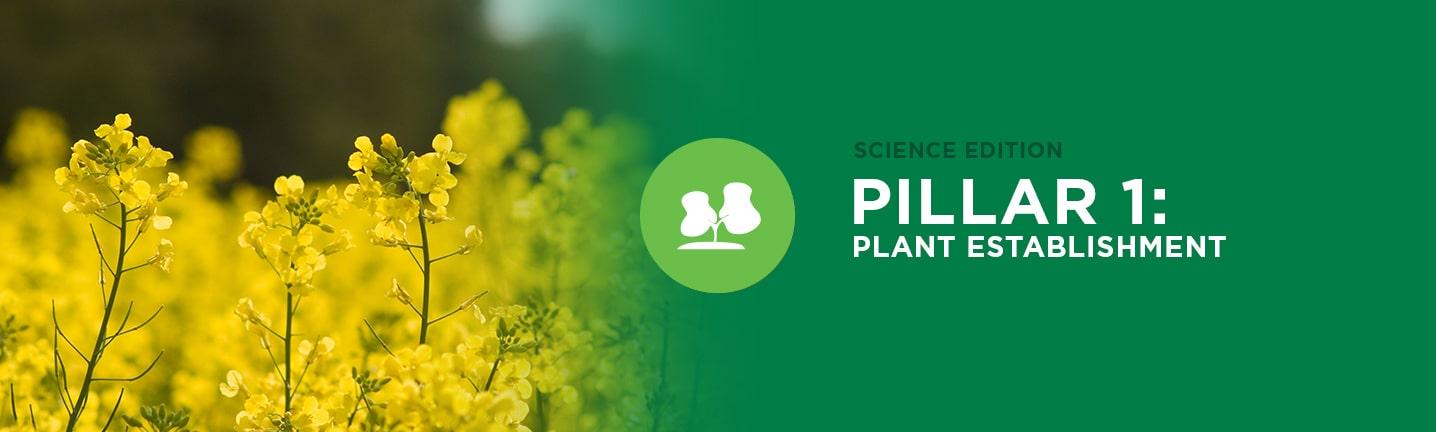 Pillar 1: Plant Establishment