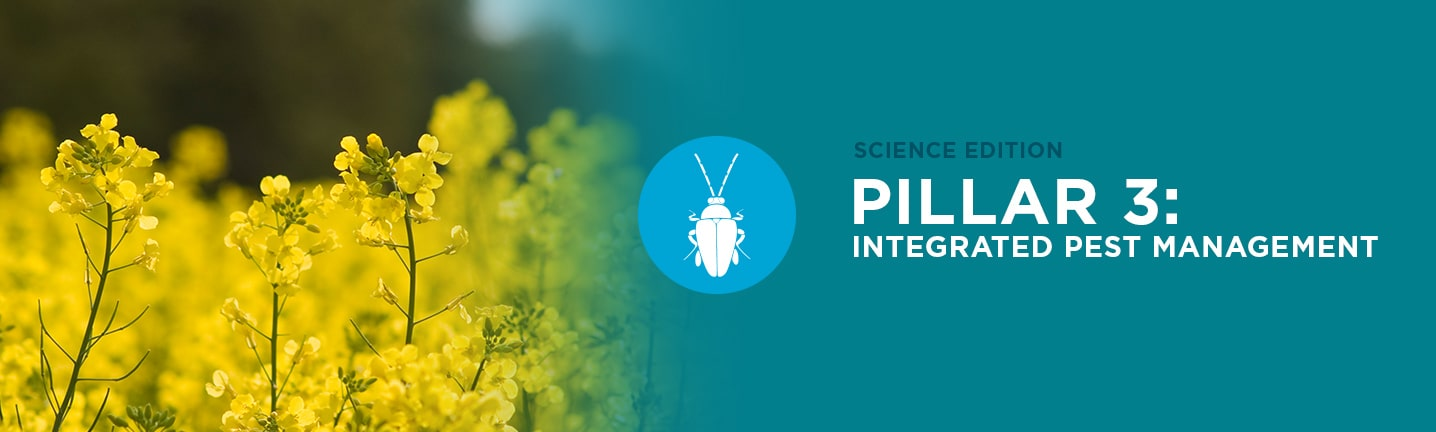 Pillar 3: Integrated Pest Management