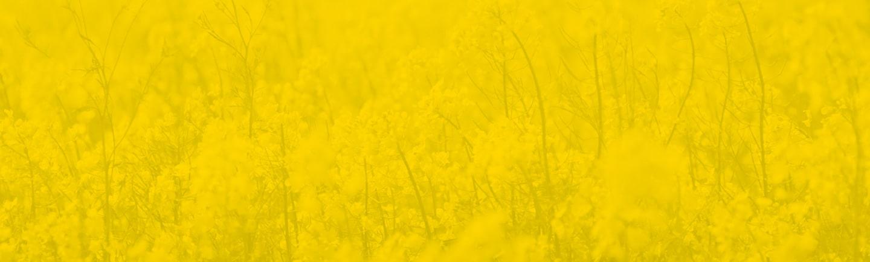 Yellow Field Background