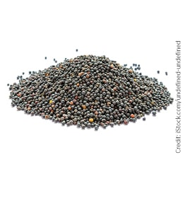 Pile of canola seed
